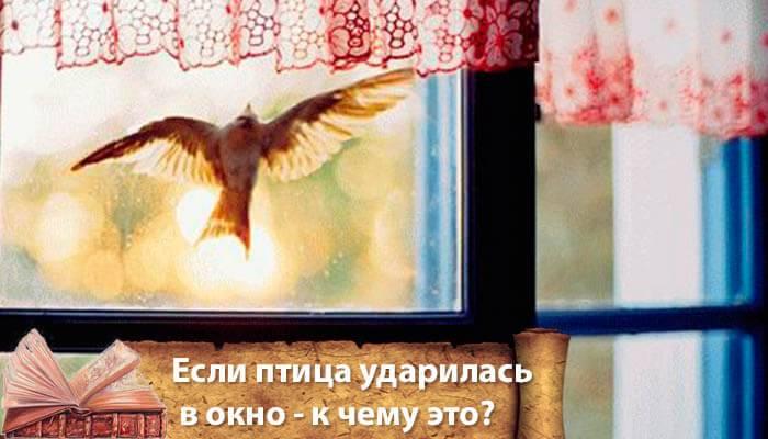 Народная примета, если птица ударилась в окно и улетела
