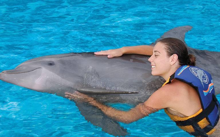 К чему снятся дельфины женщине и мужчине?