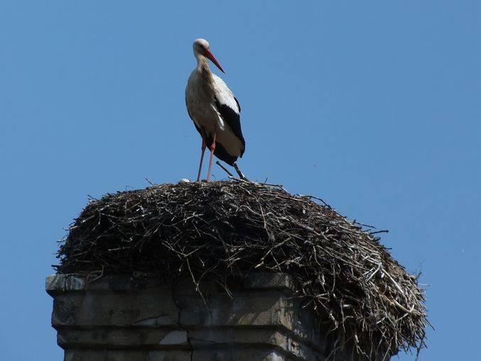 Приметы – аист на крыше и над головой