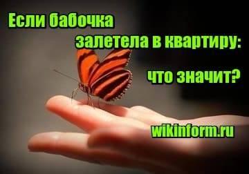Все приметы про бабочек