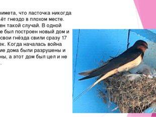 Приметы о ласточках — к чему залетела в дом, свила гнездо рядом