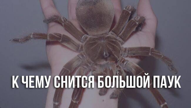 Смахивать пауков