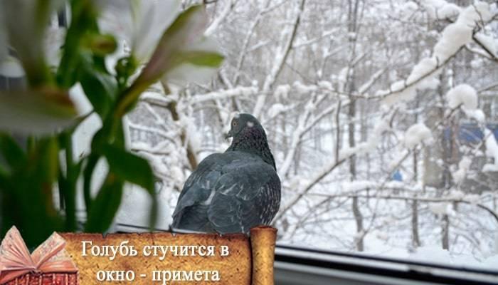 Птица ударилась в окно и улетела: хорошая или плохая примета?