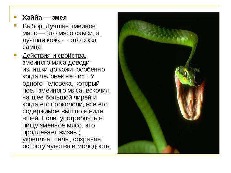 К чему снится змея. видеть во сне змея - сонник дома солнца
