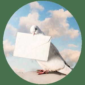 Онлайн гадание почтовая голубка, узнай свою судьбу