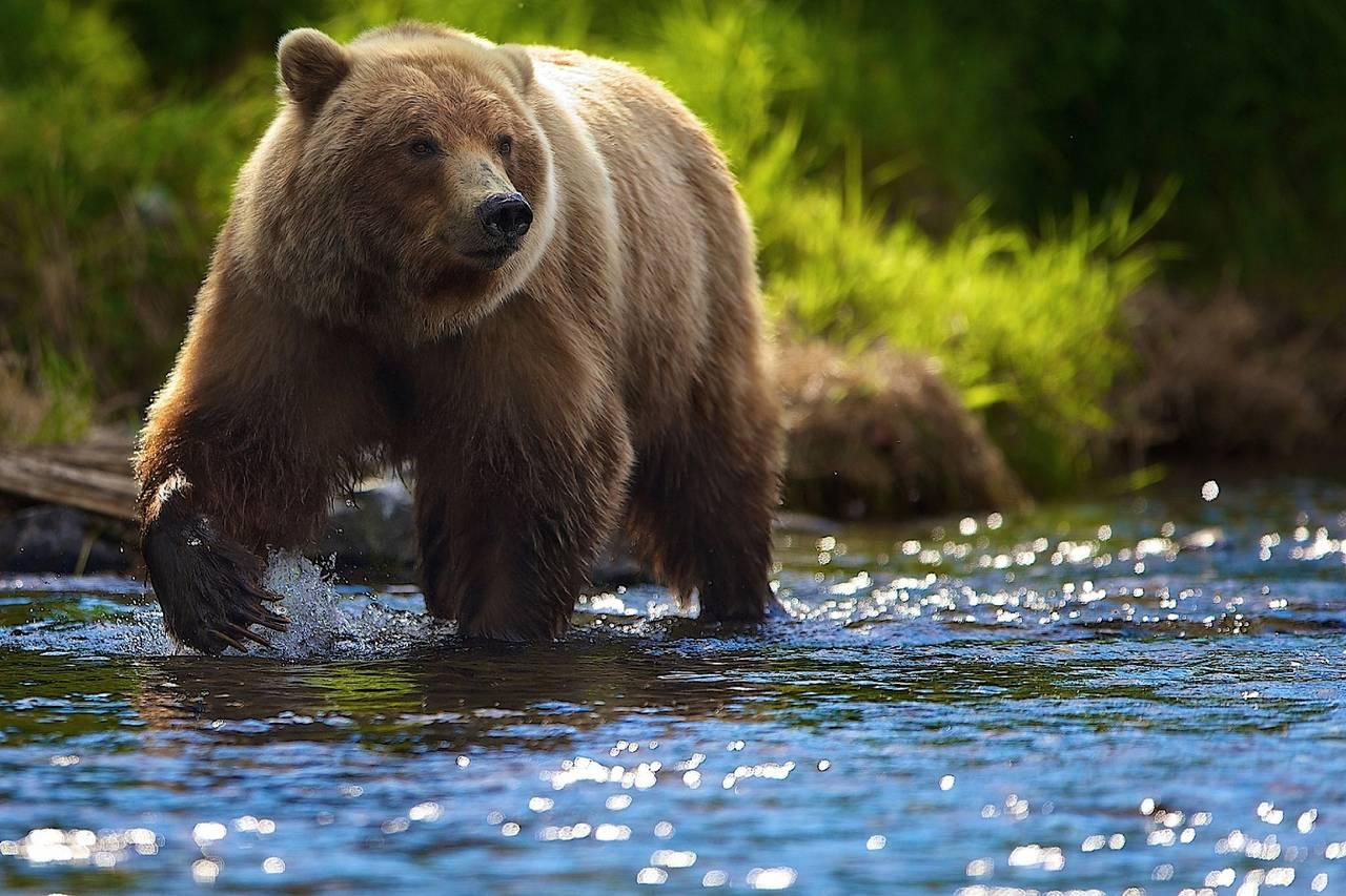 Сонник — медведь. к чему снится видеть во сне белого, бурого, коричневого и черного медведя замужней и незамужней женщине, девушке, мужчине, беременной?