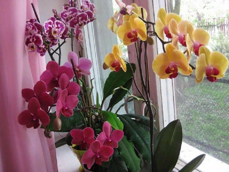 Орхидея в доме: приметы, суеверия и правила круглогодичного цветения