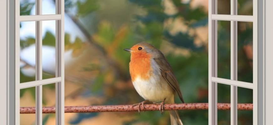 К чему стучится птичка в окно – примета