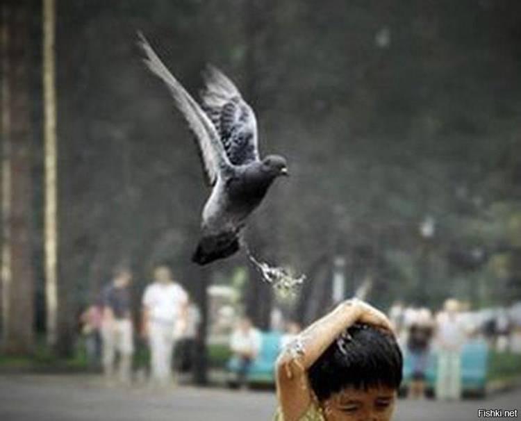 Примета – птица накакала, к чему это - мои правила