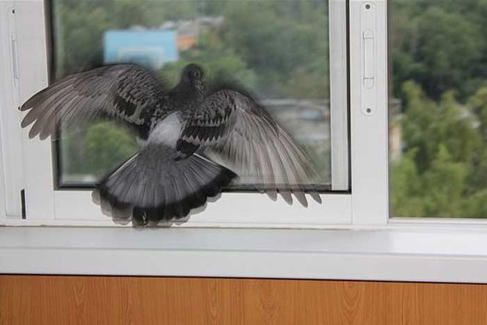 Воробей на окне: плохая примета или хорошая?