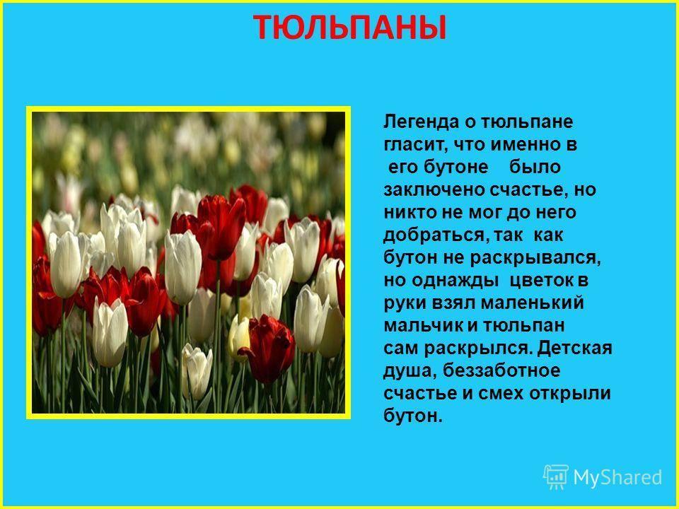 Растения из легенды – 10 самых вдохновляющих историй   вдохновение (огород.ru)