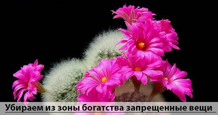 a2f90096732d5892a62861d43f079e9a.jpg