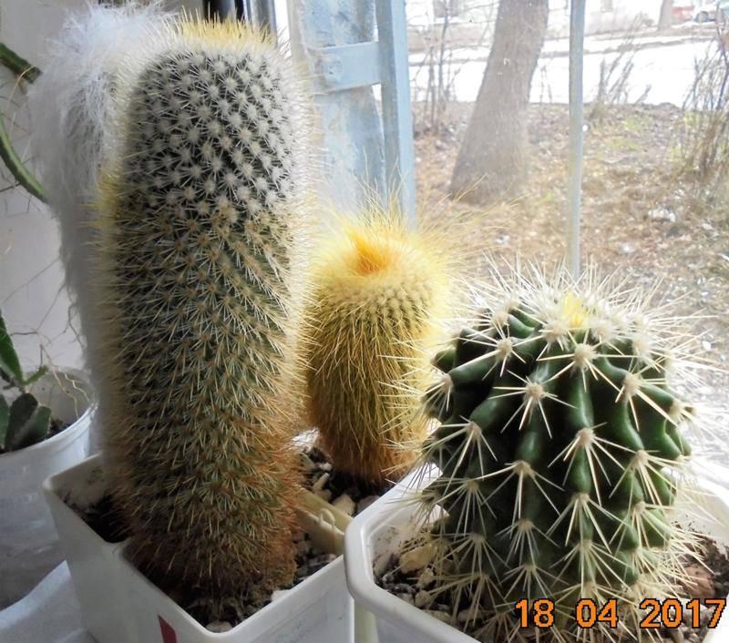 Можно ли держать кактус в доме - энергетика растения, приметы и суеверия