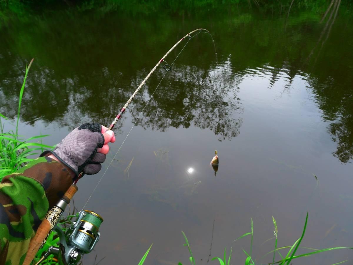 К чему снится рыба: толкование по соннику