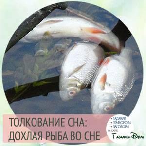 Сонник рыба свежая но мертвая. к чему снится рыба свежая но мертвая видеть во сне - сонник дома солнца
