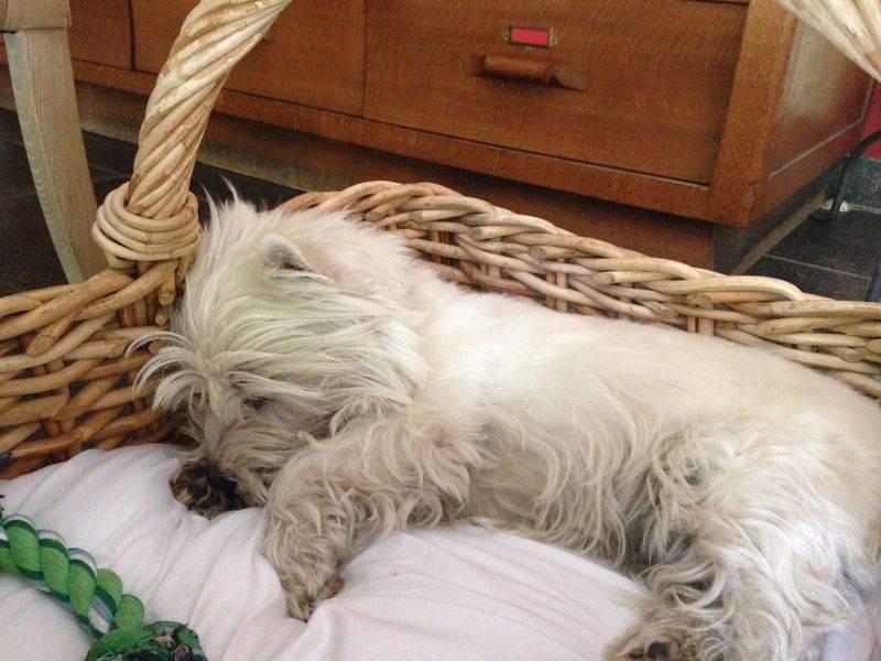 Сонник черная и белая собака. к чему снится черная и белая собака видеть во сне - сонник дома солнца