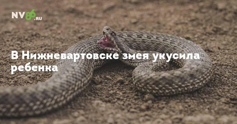 Сонник укусила змея. к чему снится укусила змея видеть во сне - сонник дома солнца