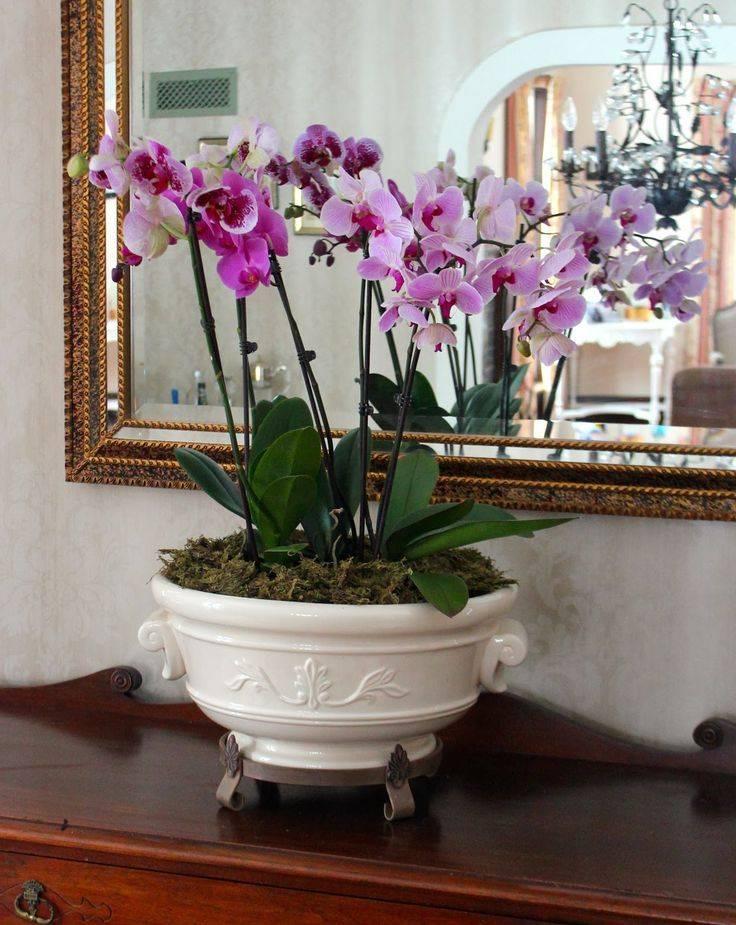 Стоит ли держать дома орхидею: приметы и суеверия про цветок