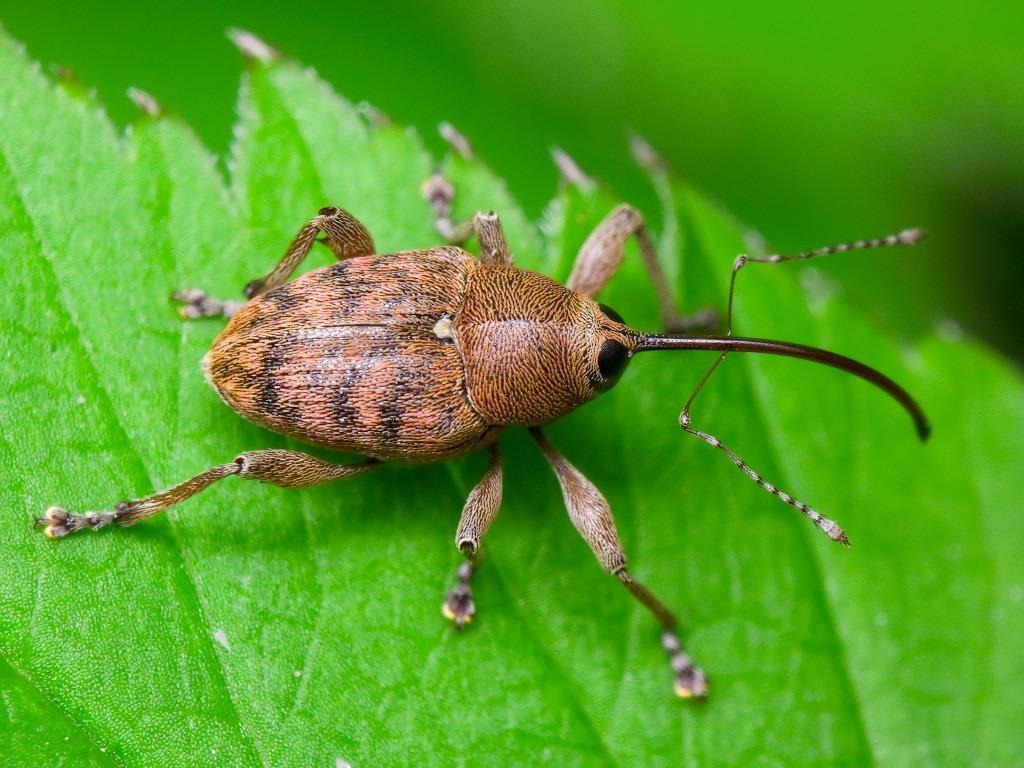Ядовитые растения полевые, лесные  и луговые   блог для дачника.