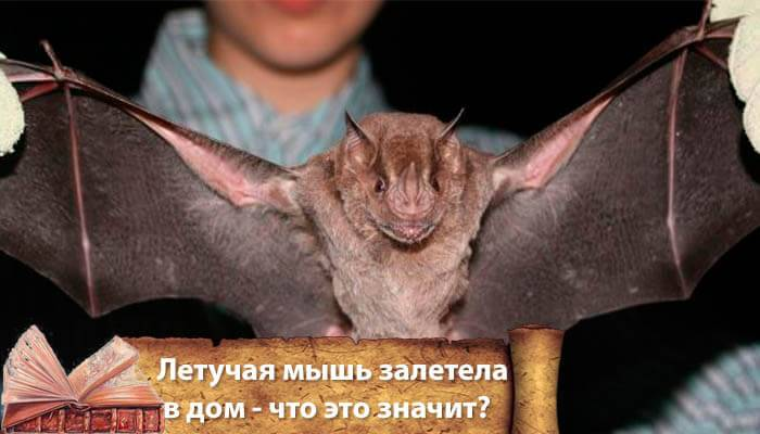 Летучая мышь залетела в дом, приметы хорошие и плохие