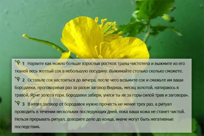 Заговор от папиллом и бородавок: 10 способов лечения