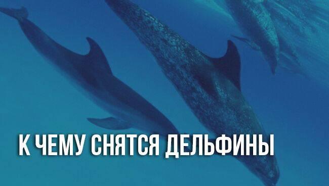 К чему снится дельфин. видеть во сне дельфин - сонник дома солнца