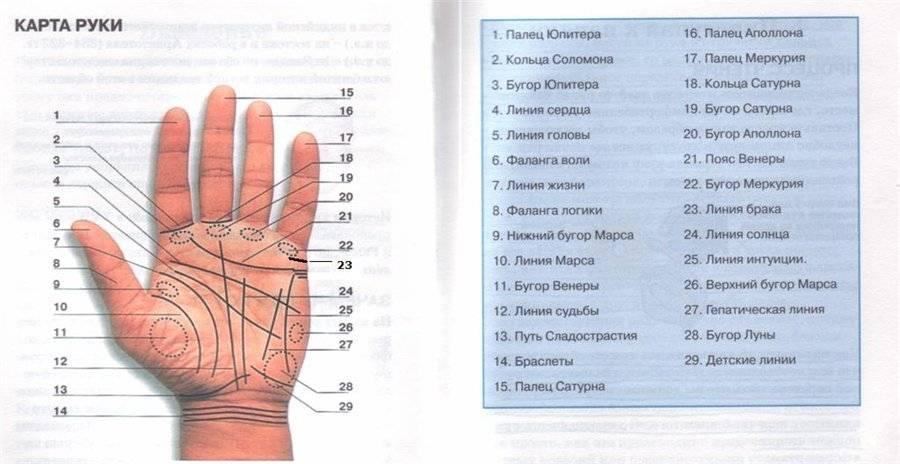 Родинка на левой или правой ладони руки: значение у женщин и мужчин