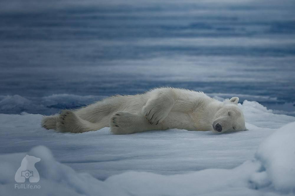 К чему снится медведь: что означает видеть во сне медведя