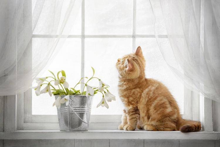 Приметы про белую кошку, кота или котенка - в доме, если перебежала дорогу и другие варианты приметы про белую кошку, кота или котенка - в доме, если перебежала дорогу и другие варианты