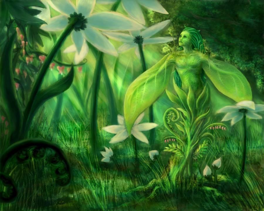 Категория:зеленые дамы