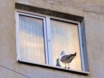К чему птица бьется в окно: толкование народной приметы