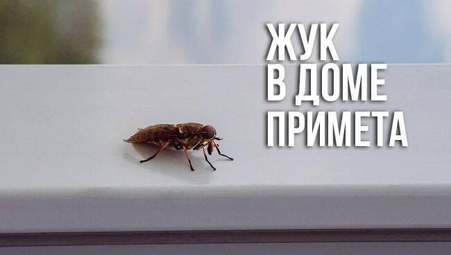 Стрекоза обыкновенная – как живет насекомое? стрекозы: приметы и интересные факты к чему летают стрекозы.