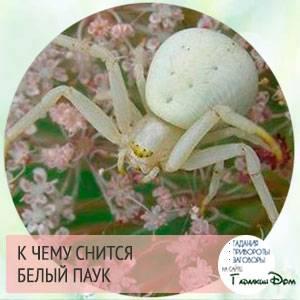 Сонник стать пауком. к чему снится стать пауком видеть во сне - сонник дома солнца