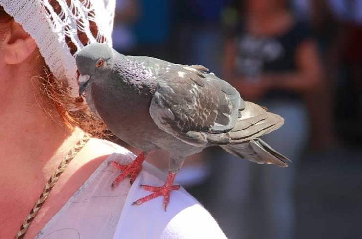 Примета накакала птица на голову, плечо, руку, машину