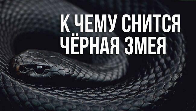 Сонник убивать маленьких змей. к чему снится убивать маленьких змей видеть во сне - сонник дома солнца