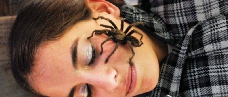 Паук в доме: к чему примета увидеть вечером или ночью, почему появляется много паучков