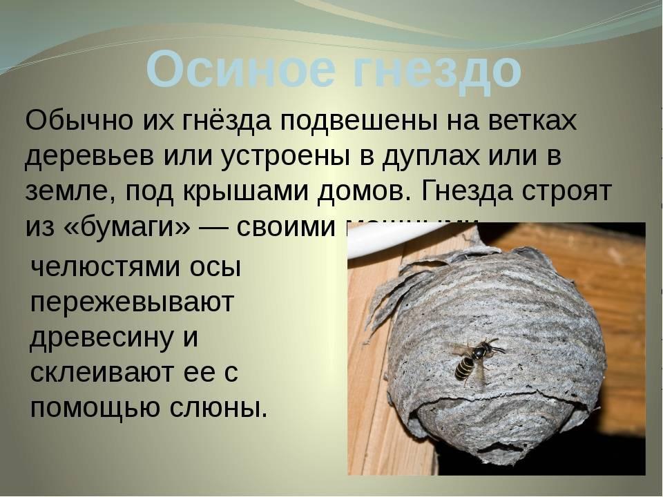Ласточки свили гнездо на балконе или в доме: что означает примета