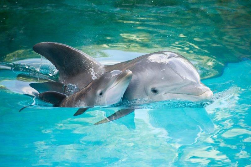 Приснились дельфины — толкование сна по сонникам