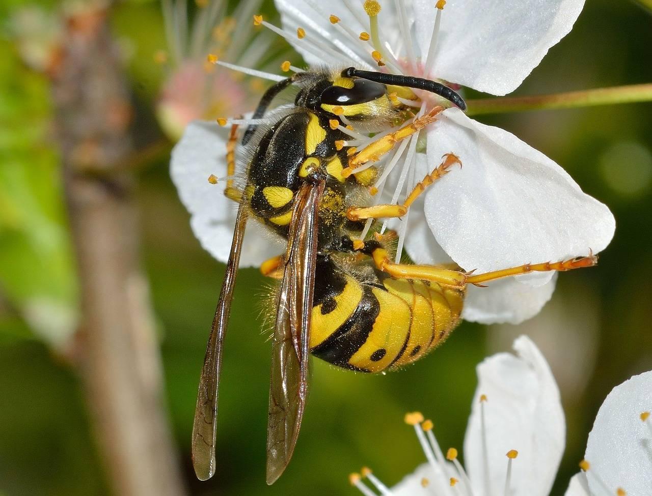 Шмель, пчела или оса залетели в дом: что сулят приметы - delfi