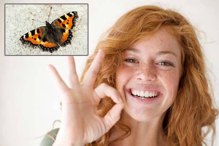 Что означает бабочка залетела в дом. к чему залетает бабочка в квартиру: волшебная вестница добра. как избавиться от незваного визитёра