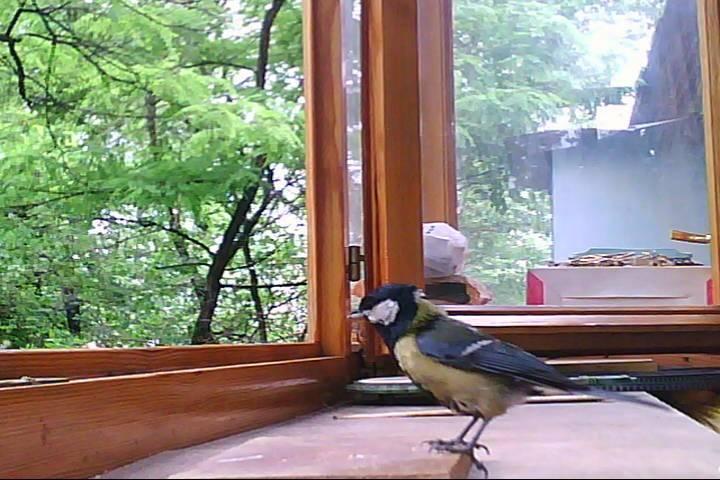 Чего ждать, если голубь залетел на балкон