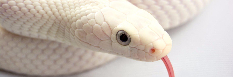 Сонник нападает маленькая змея. к чему снится нападает маленькая змея видеть во сне - сонник дома солнца