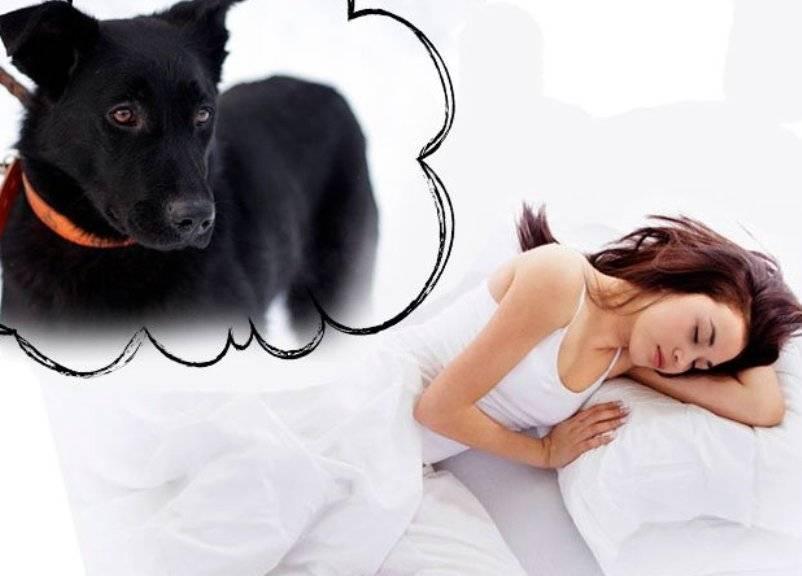 Сонник собака нападает и кусает. к чему снится собака нападает и кусает видеть во сне - сонник дома солнца
