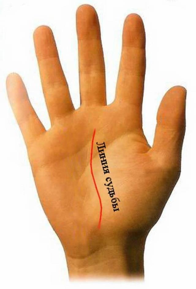 Линия счастья и таланта или аполлона на руке значение (9 фото)