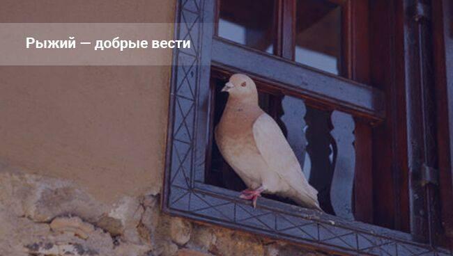 Птица ударилась в окно и улетела – примета и ее толкование в разных случаях
