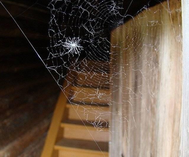 Причины появления пауков в доме — это хорошо или плохо? народные приметы и нужно ли бороться с «неприятными соседями»