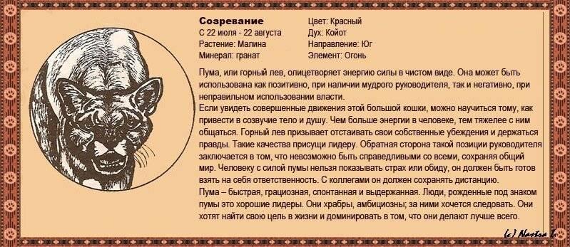 Славянский календарь тотемных животных по годам