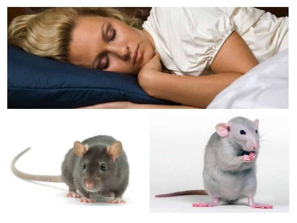 К чему снится крыса во сне для женщины