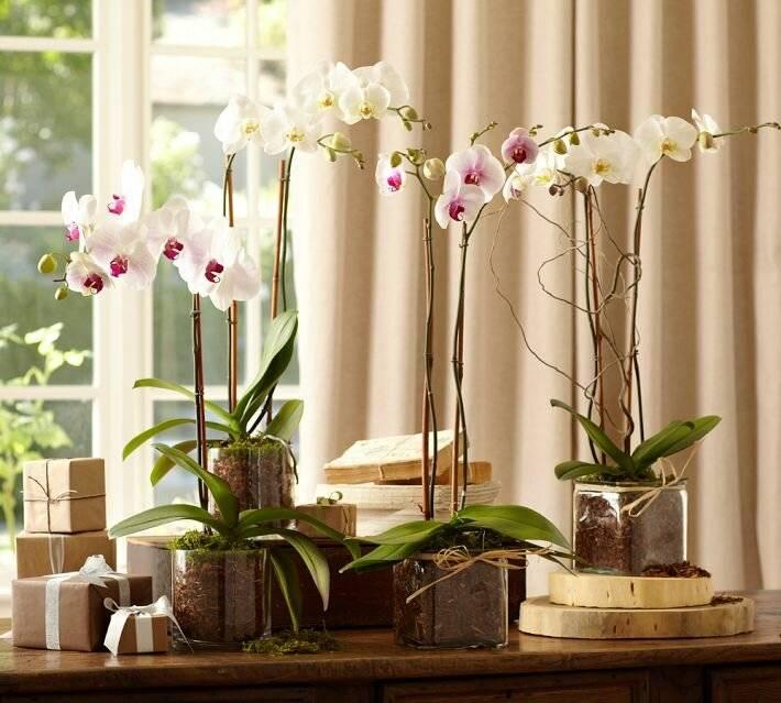 Цветок орхидея: народные приметы и суеверия для дома