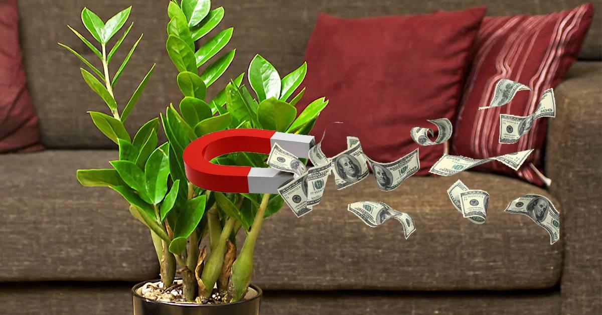 Как привлечь деньги в дом: народные приметы, заговоры, советы экстрасенсов, фен-шуй, талисманы